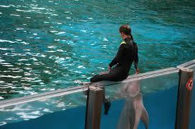 dit is een dolfijnen trainster