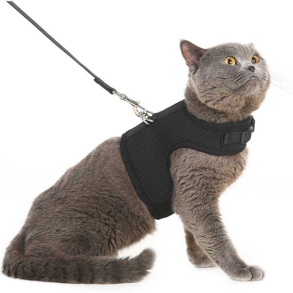 Pupteck Escape Proof Cat Harness With Leash Holster Style Adjustable Soft Mesh Best For Walking Black Large Make C In 2020 Best Cat Harness Cat Leash Cat Harness