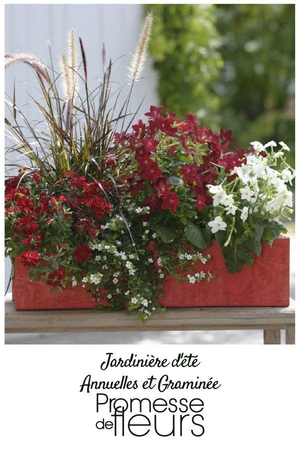 Collection De 5 Varietes D Annuelles En Mini Mottes Assorties Dont Une Graminee Pour Des Jardinieres Et Plante Pour Jardiniere Bacs De Jardin Fleur Jardiniere