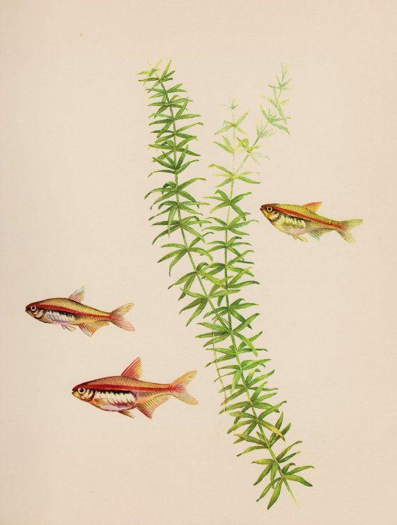 VintageTropical Aquarium Fish Print Ocean Gallery Wall Art Beach ...