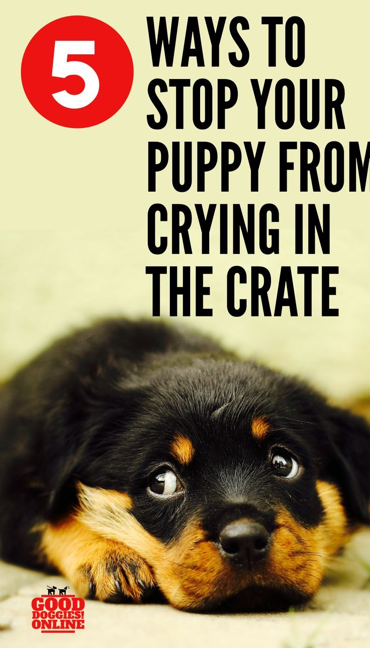 5 Ways to Stop your Puppy from Crying in Crate Puppies