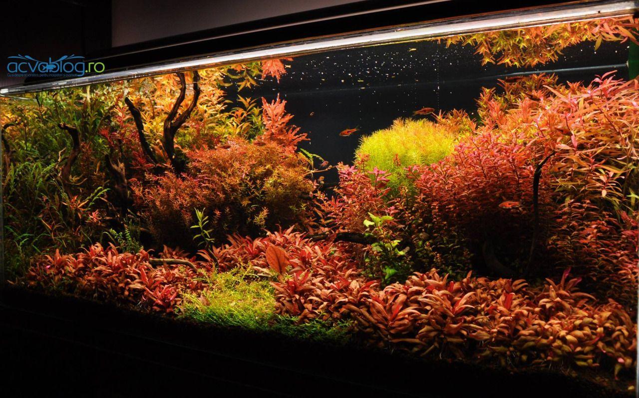 Shodi001 Aquarium Landscape Aquascape Tropical Fish Aquarium