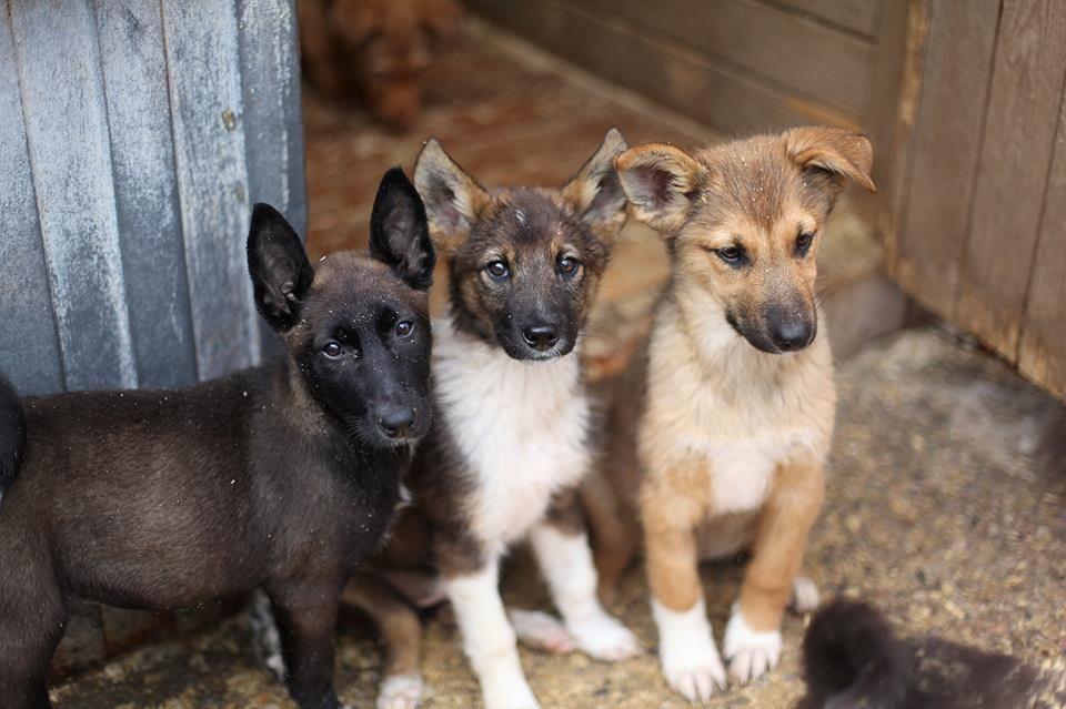 Viipurin Koirat ry - Pieniä kodittomia viipurilaisia tarhalla ♥