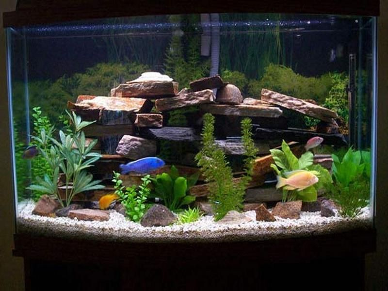 Simple Set Up To Get Cool Fish Tank Decoration Photo Ideas With Coral Plant Interior Aquarium Modern Aqua Fresh Water Fish Tank Fish Tank Decorations Fish Tank