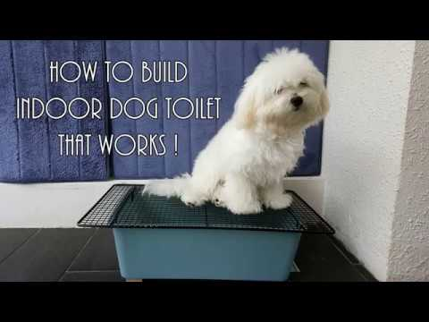 Indoor Dog Toilet That Works Indoor Dog Dog Toilet Dog Potty