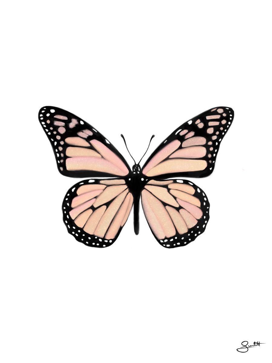 3ffe7cf038f03bda239344dceff63ad3 » Butterfly Drawing Aesthetic