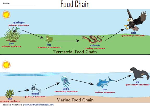 Terrestrial and Marine Food Chain Chart | Food chain ...