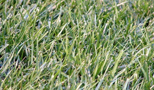 The Best Time To Plant Grass Seed In Texas