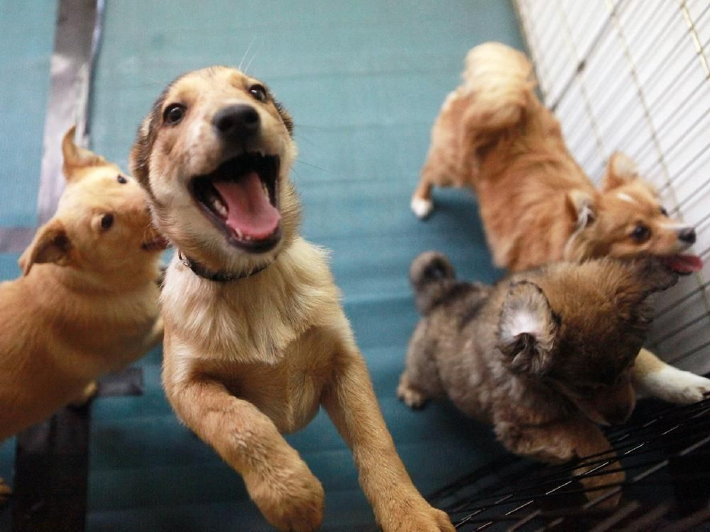 Montreal Diary Online Pet Sales Pose Ethical Dilemma As