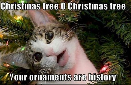 Oh Christmas Tree , kitty