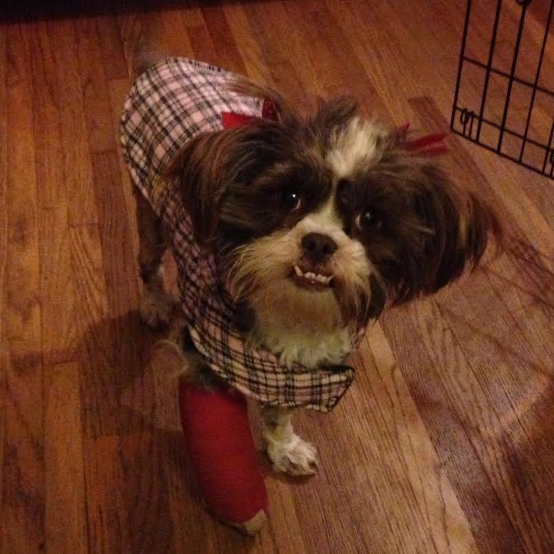 Available Pets At Animal House Shelter Inc In Huntley Illinois Labrador Retriever Pet Adoption Labrador