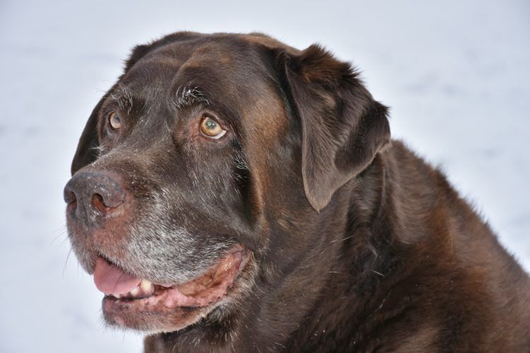 Ways To Keep Senior Dogs Fit Dogs Dog Ages Old Dogs