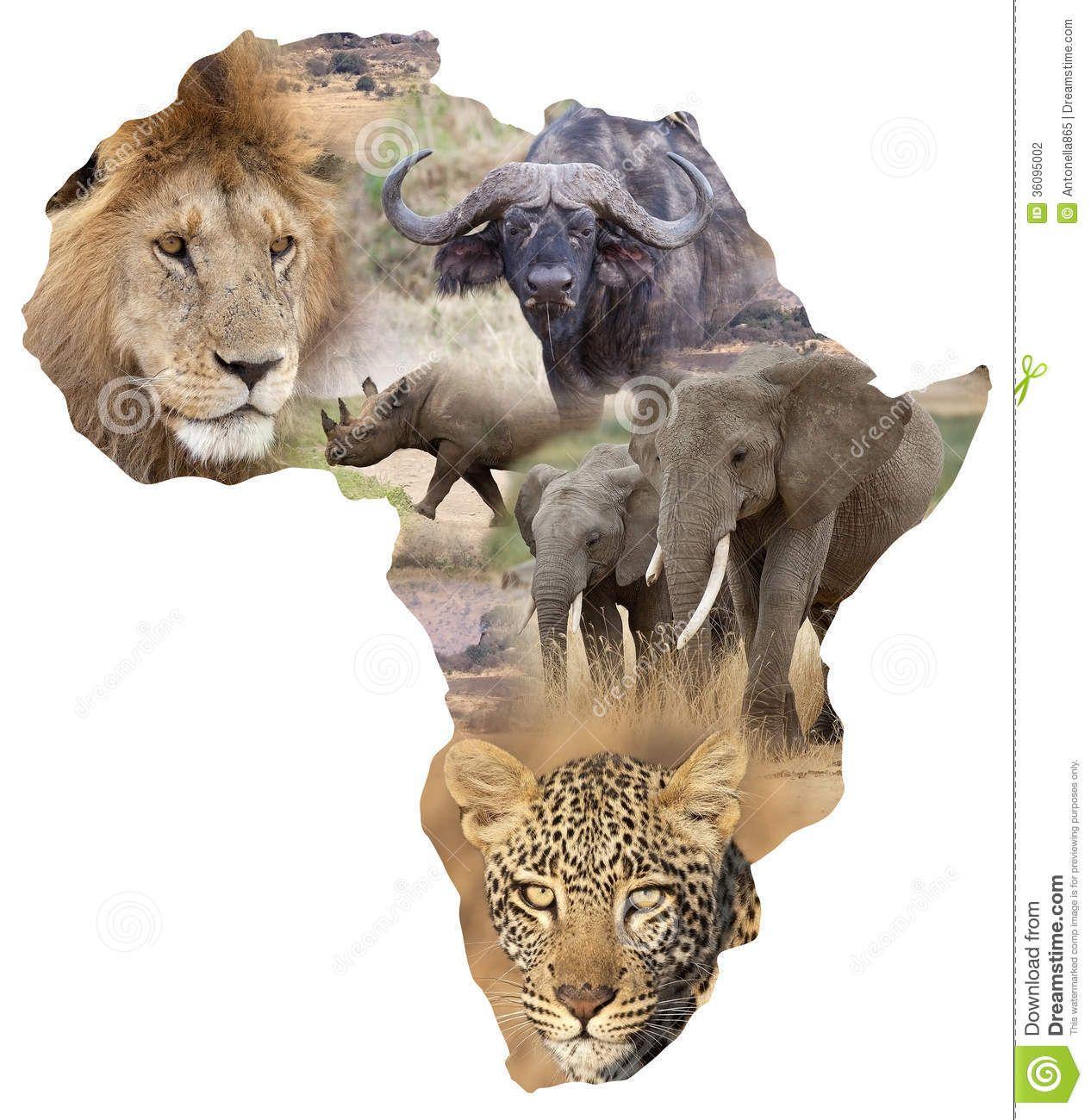 the big five dieren Google zoeken