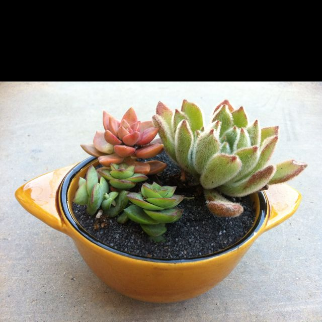 Succulents in vintage pottery