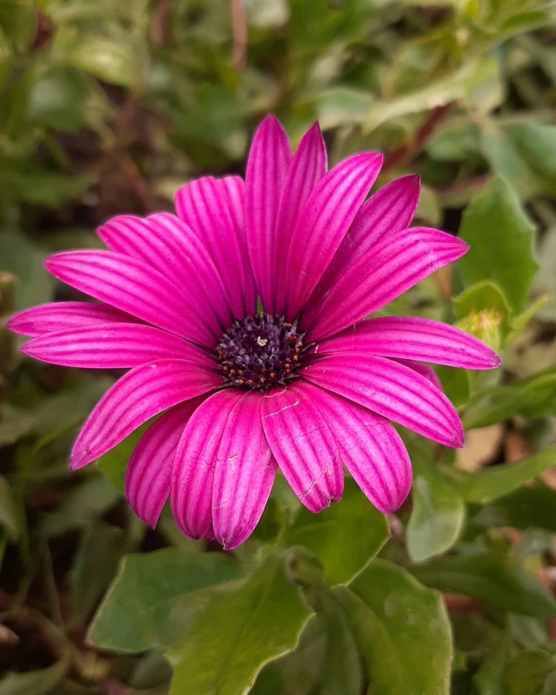 #flowerdesign #flowery #flower_perfection #flowersoftheday #flowering #flowersta... #flower #flower_daily #flower_igers #flower_perfection #flower_special_ #flowerarrangement #flowerbouquet