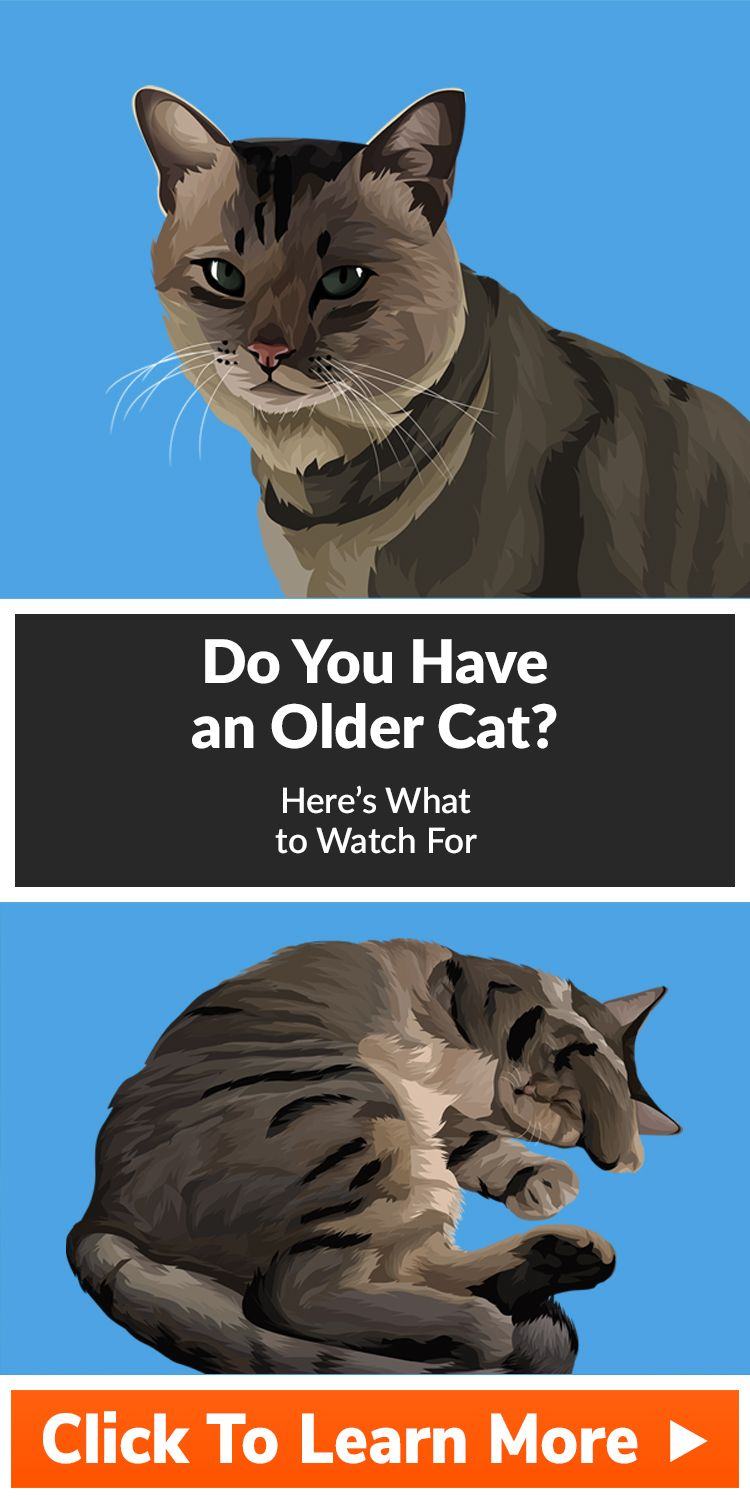 Do You Have An Older Cat Here S What To Watch For Older Cats Cats And Kittens Quality Cat