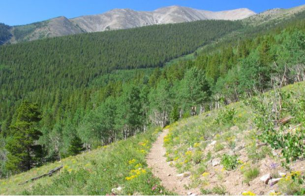 5. The Colorado Trail