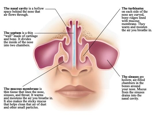my nasal passages are swollen - 534×432