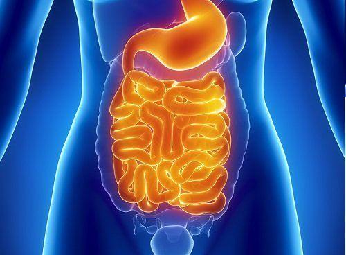 El intestino es el encargado de extraer los nutrientes de los ...