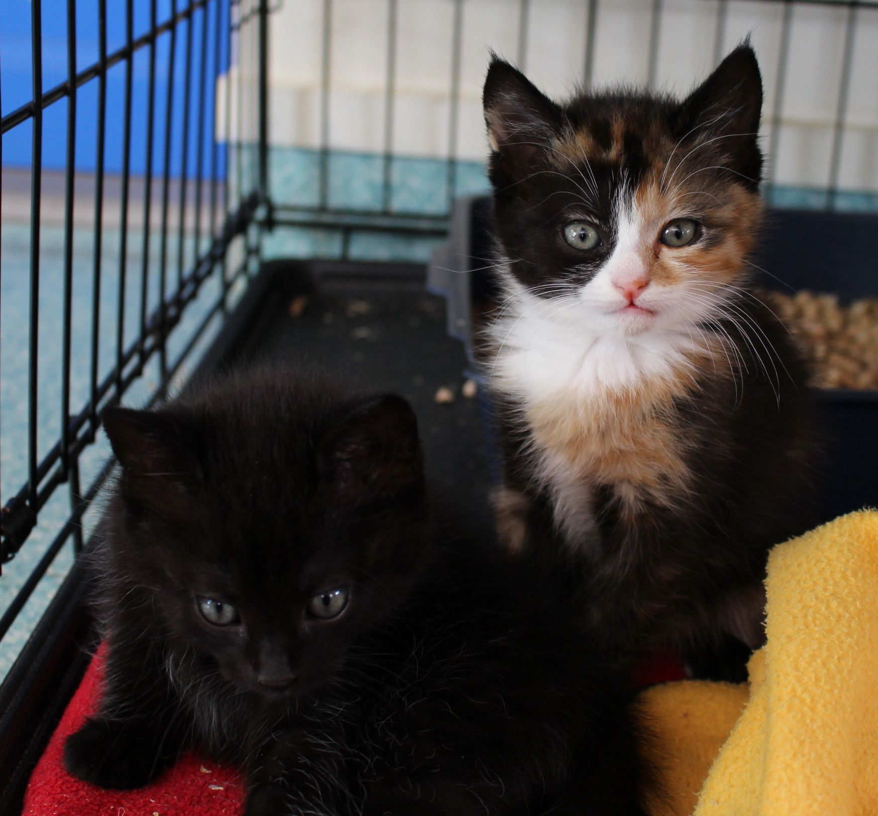 some kittens that have been with us Cat adoption