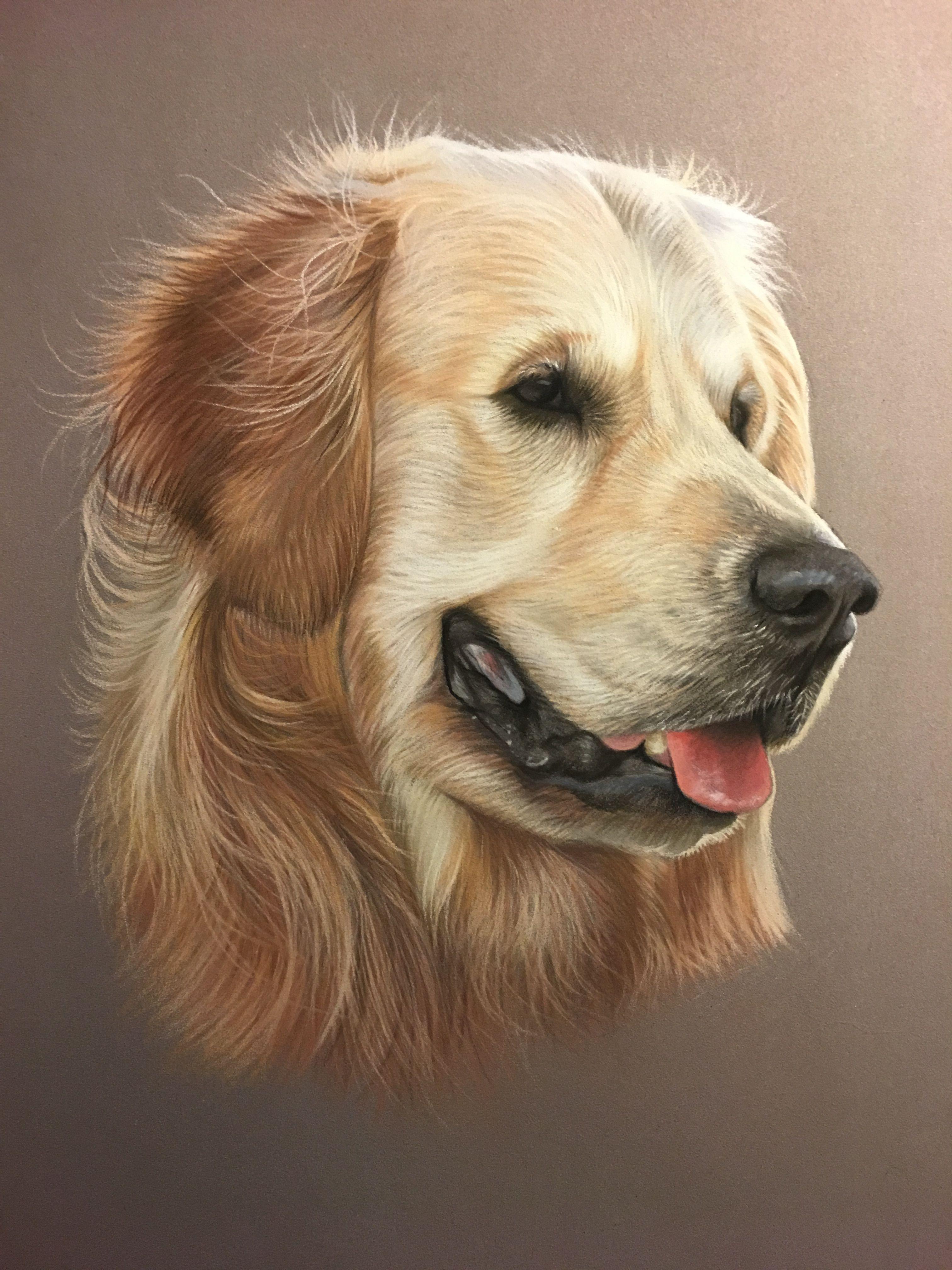 Golden retriever au pastel peinture au pastel d apr s photo art animalier hd arts animaux en - Dessin golden retriever ...