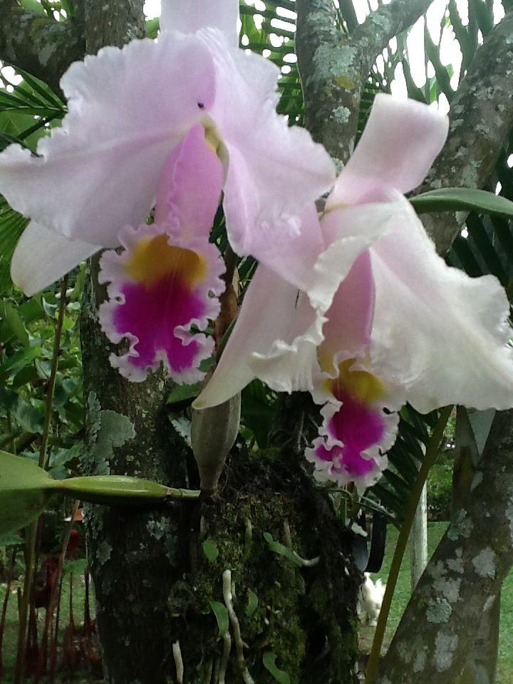 La Vega Cundinamarca Colombia Orquideas Orquidarios Diferentes Flores