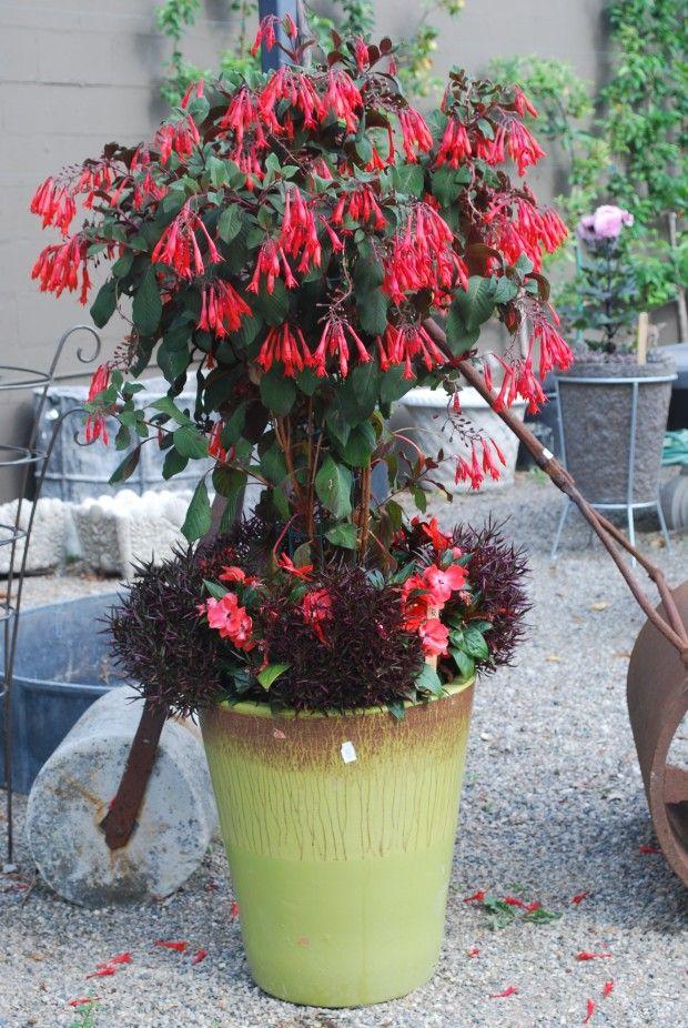 Gardenmeister Fuchsia Garden Containers Vegetable Garden Design