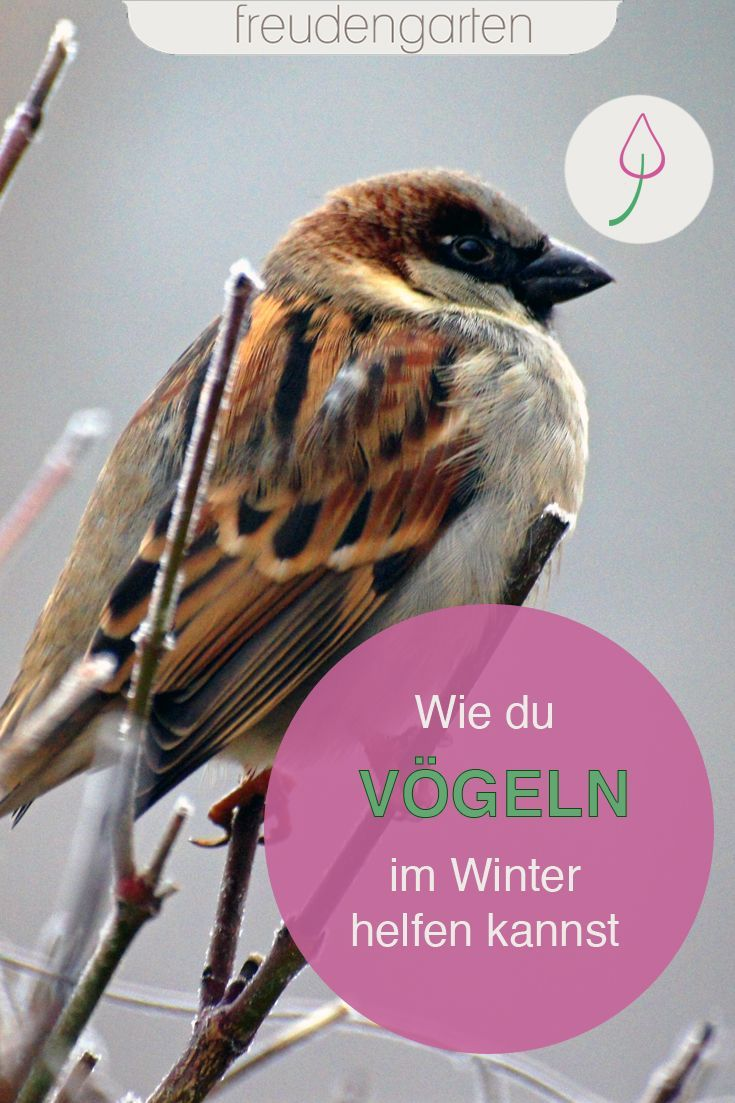 Vogel Im Winter In 2020 Naturgarten Tiere Futtern Gartenblog