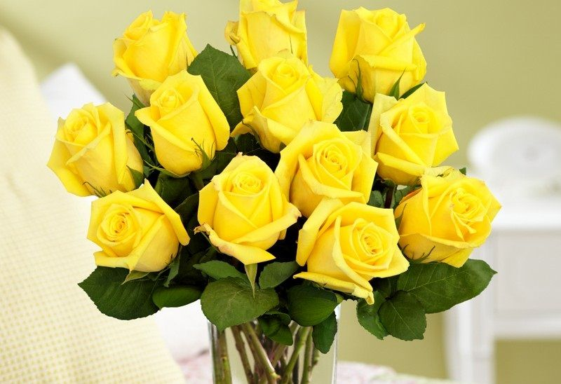 History And Meaning Of Yellow Roses Flower Power Yellow Roses