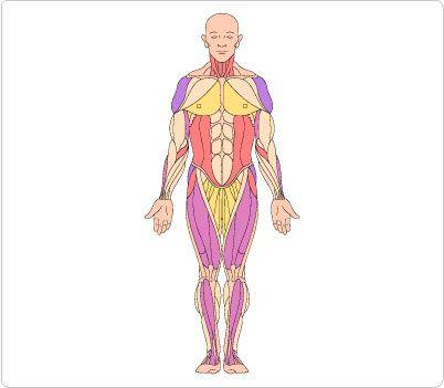 body clip art human body clip art pinterest clip art rh pinterest com human body clipart black and white human body clipart free