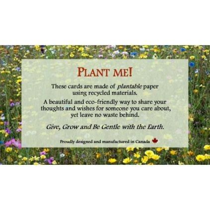 Information about plantable cards sold by explorers market republic of retail find this pin and more on greeting cards plantable m4hsunfo