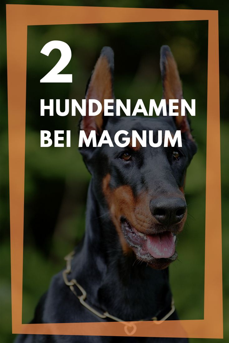 Hundenamen Bei Magnum Wie Heissen Higgins Dobermanner Hundenamen Krieger Namen Hunde