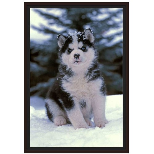 Siberian Husky Puppy Sitting In The Snow By Eazl Walnut Brown Framed Premium Gallery Wrap Puppy Sitting Siberian Husky Puppy Husky Puppy