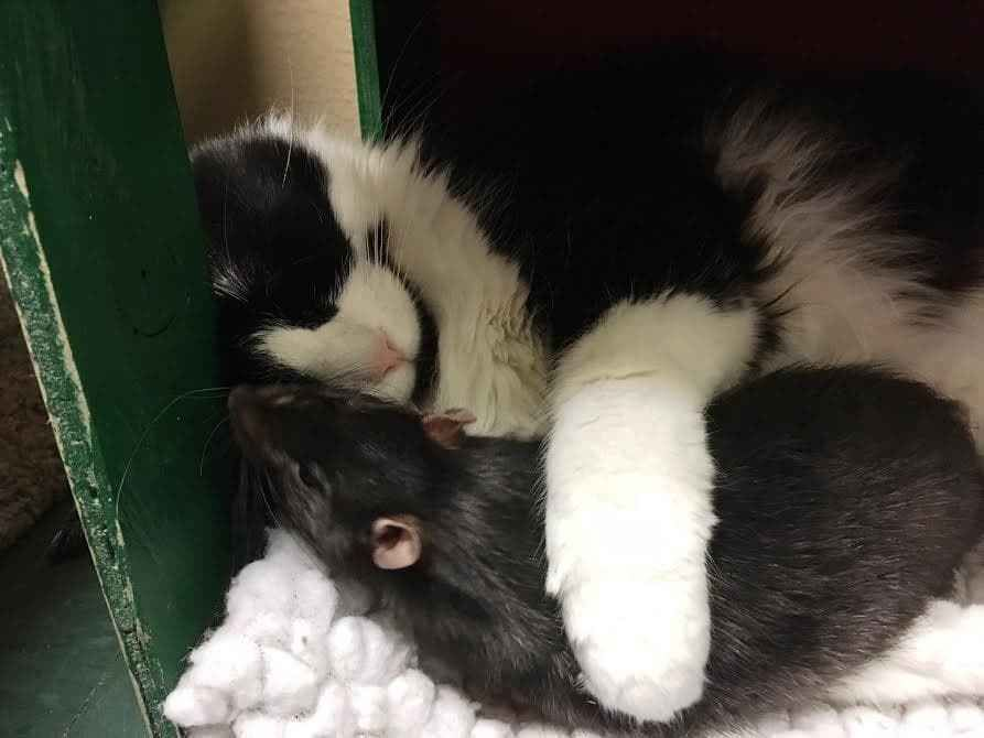 Dog cat and rat who tightly bonded at a shelter could not