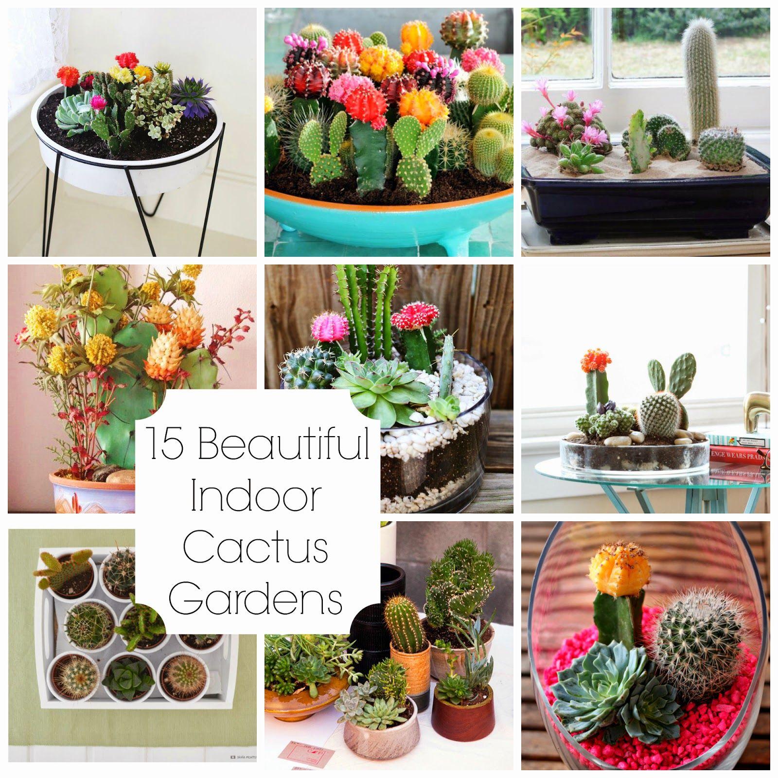 Indoor Cactus Garden 15 beautiful indoor cactus gardens stuff for my apartment 15 beautiful indoor cactus gardens workwithnaturefo
