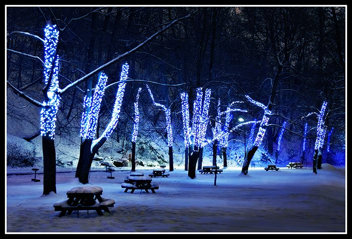 Blue and white lights for Christmas! I would love this on the trees