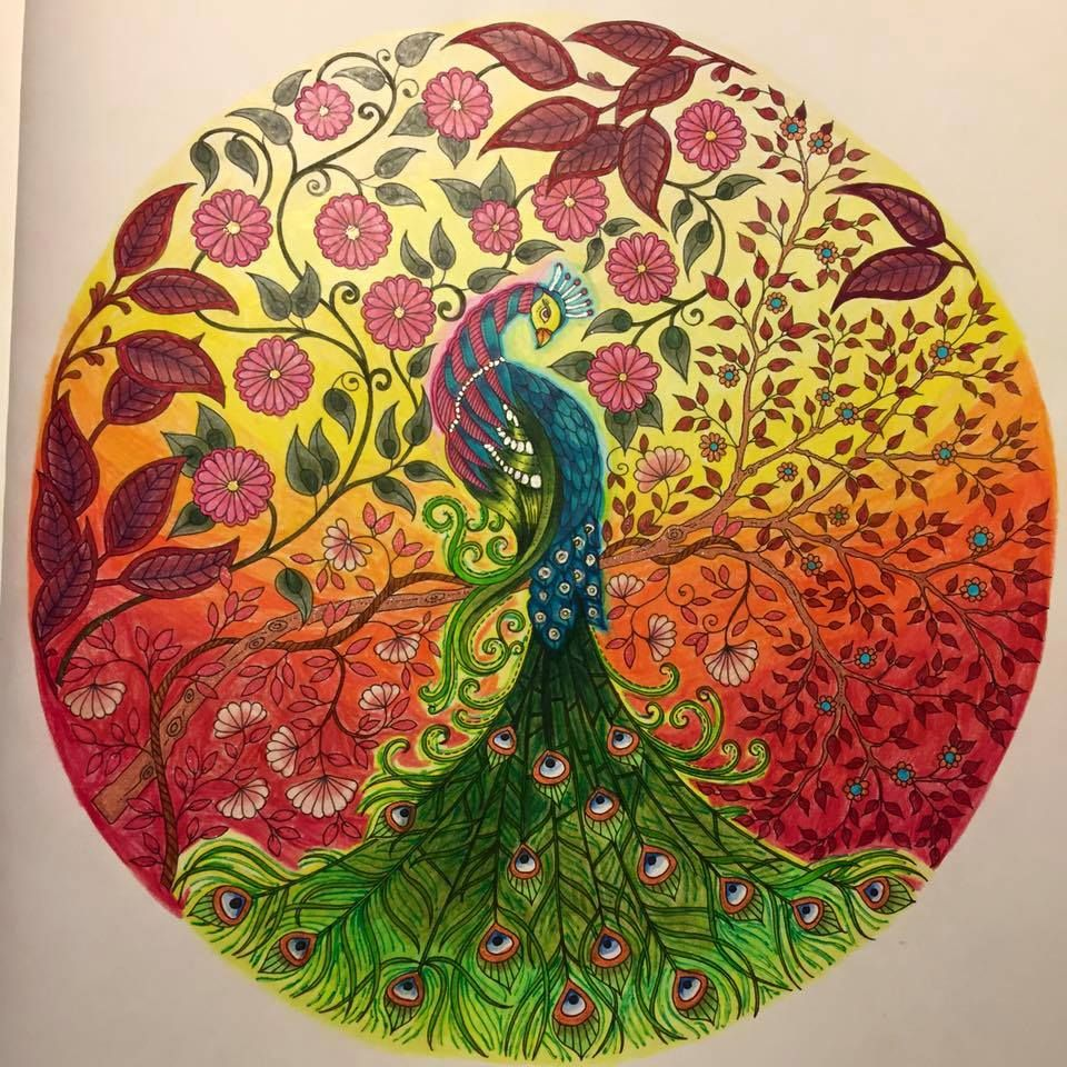 Image Result For Secret Garden Colouring Book Peacock