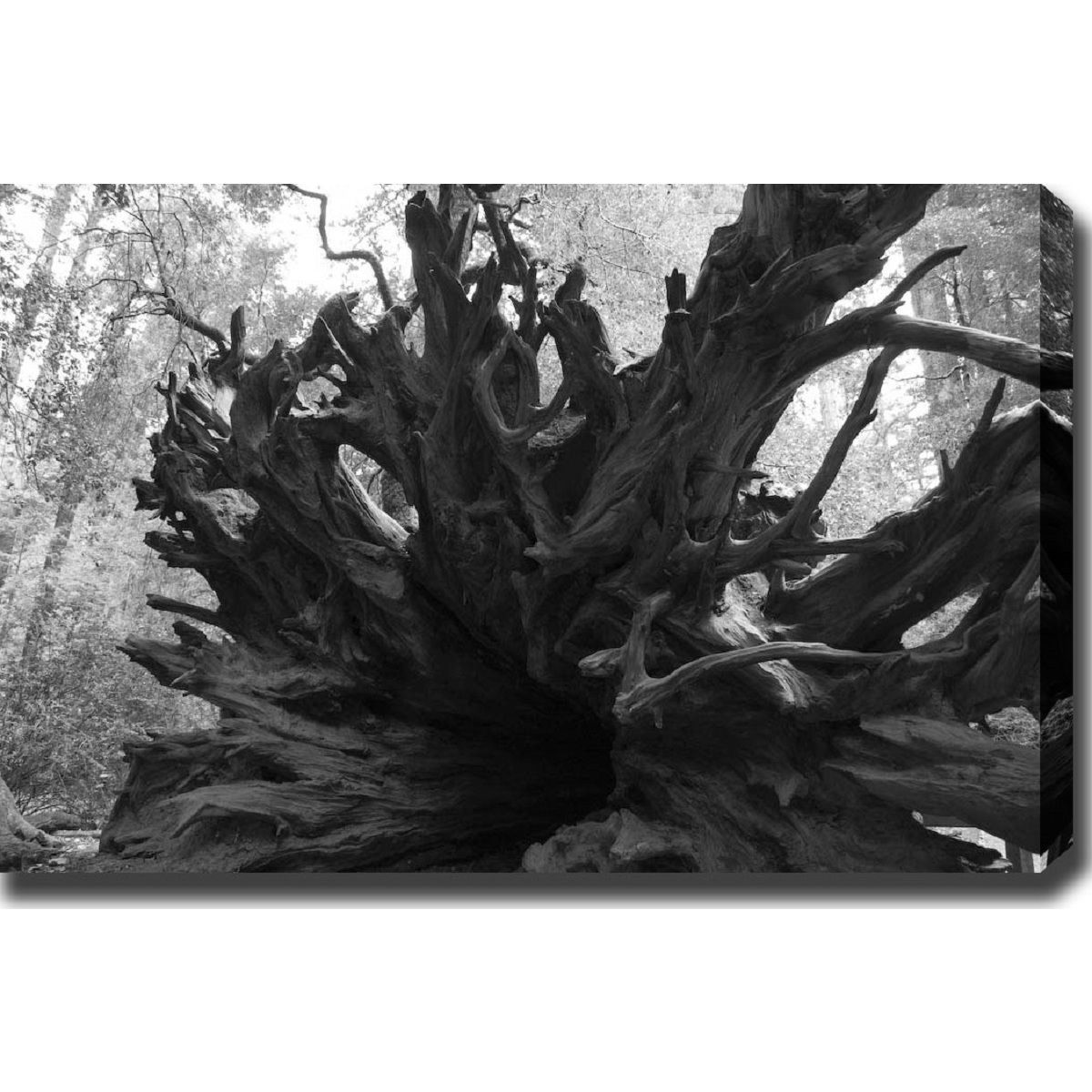 YGC 'Root' Gallery-wrapped Photography Art