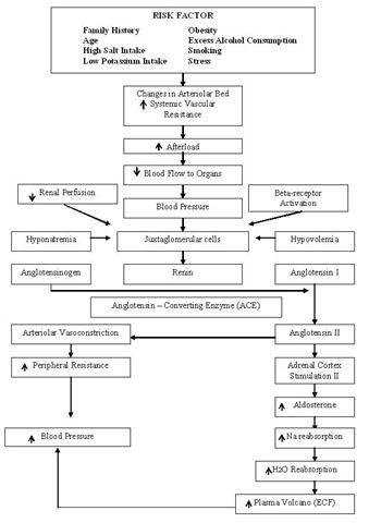 Pathophysiology Of Hypertension Nursing Pinterest Cardiac