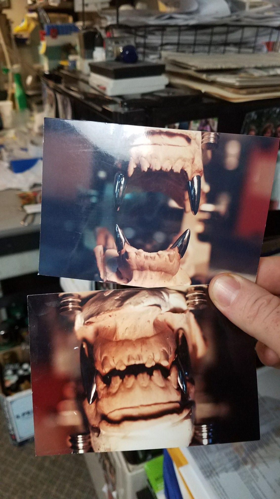 Titanium Dog Teeth : titanium, teeth, Service, Titanium, Replacement, Teeth., German, Shepherd., Stronger, Original,, Prolonging, Dogs,, Working, Shepherd