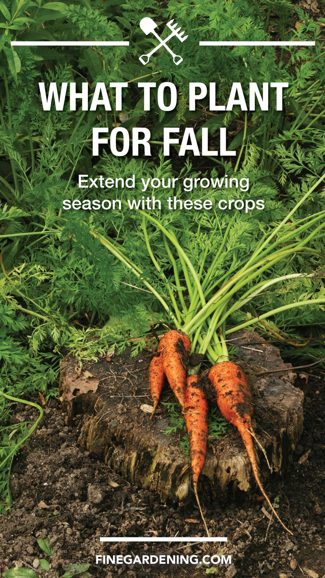 Edible Garden—What to Plant for Fall Fall plants, Edible