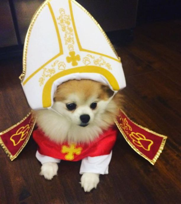 pope dog costumes