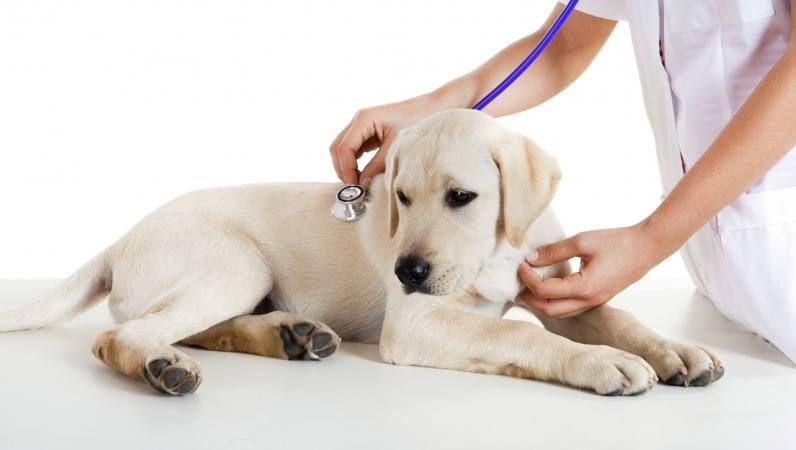 infeccion intestinal de perros