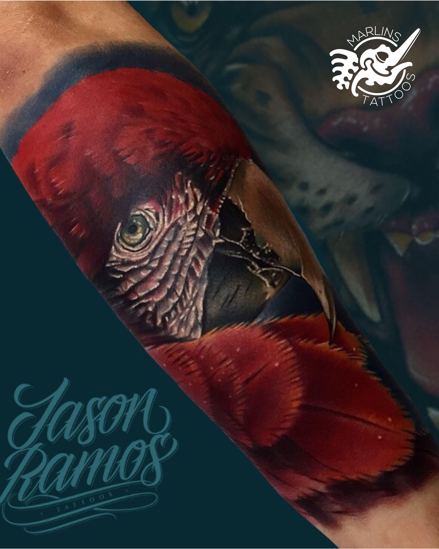 Red Macaw Tattoo Marlins Tattoos Color Tattoo Tattoos Tattoo Work