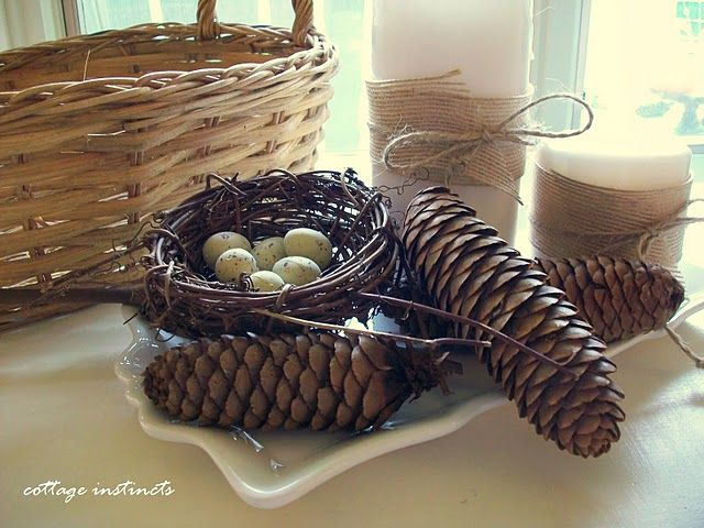 I  can never have too many pine cones and birds nests--- and they are free!!!