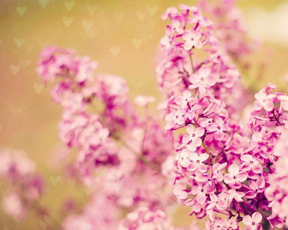 Dreamy Lilacs -  Botanical Fine Art Photography