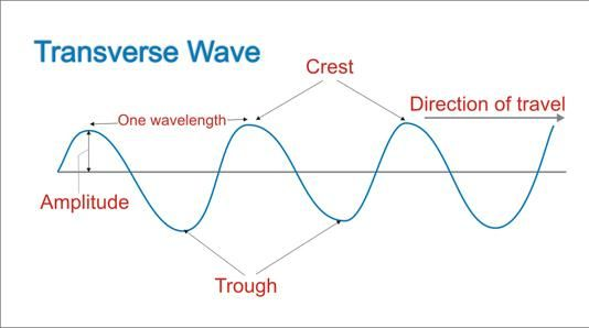 Examples of transverse waves crazy physics pinterest school examples of transverse waves ccuart Gallery
