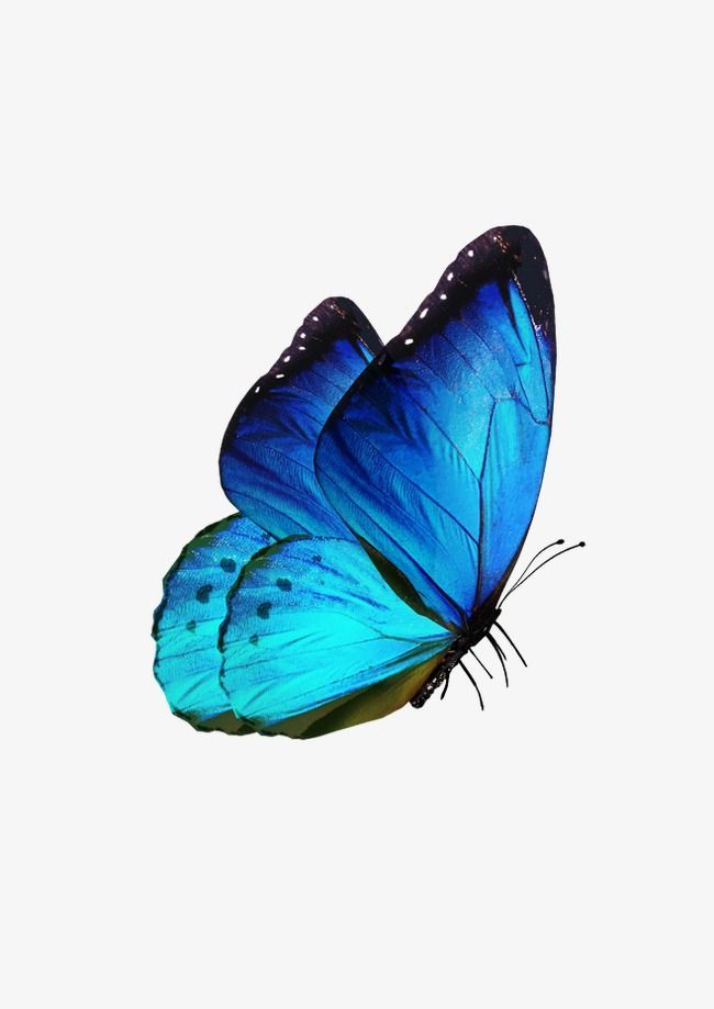 Photo of Butterfly, Butterfly Clipart, Blue, Fly PNG Transparent Clipart Image and PSD File for Free Download