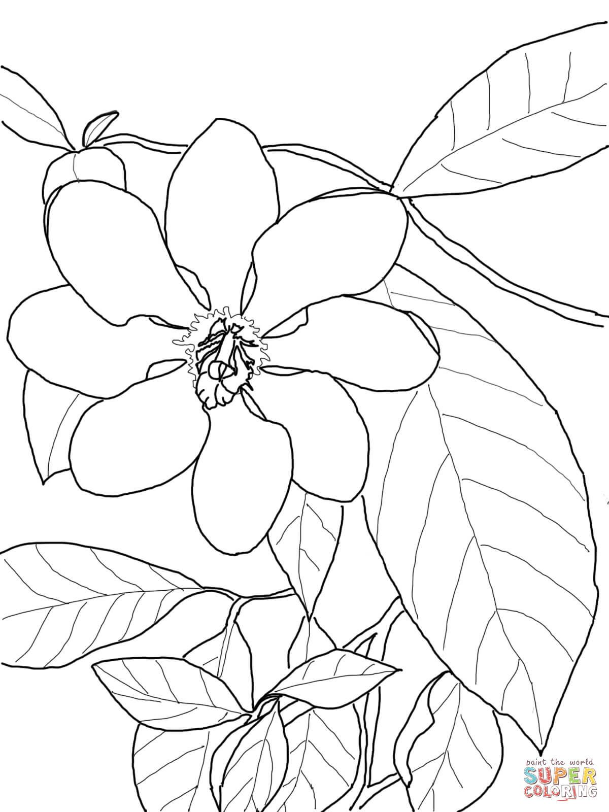Gardenia Carinata Super Coloring Drawing Flowers