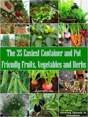 35 Easiest Container and Pot Friendly Fruits, Vegetables and Herbs The 35 Easiest Container Fruits, Vegetables & Herbs! Container gardening works almost anywhere, so whether you have a big backyard or just a small balcony you can grow your own fruits, veggies and herbs.The 35 Easiest Container Fruits, Vegeta...
